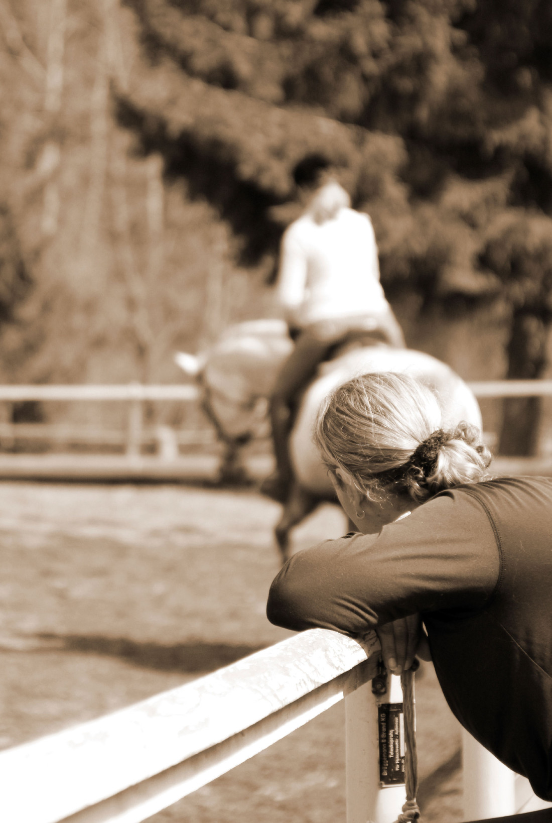 Protecting Your Equine Business The Truth About Liability Releases